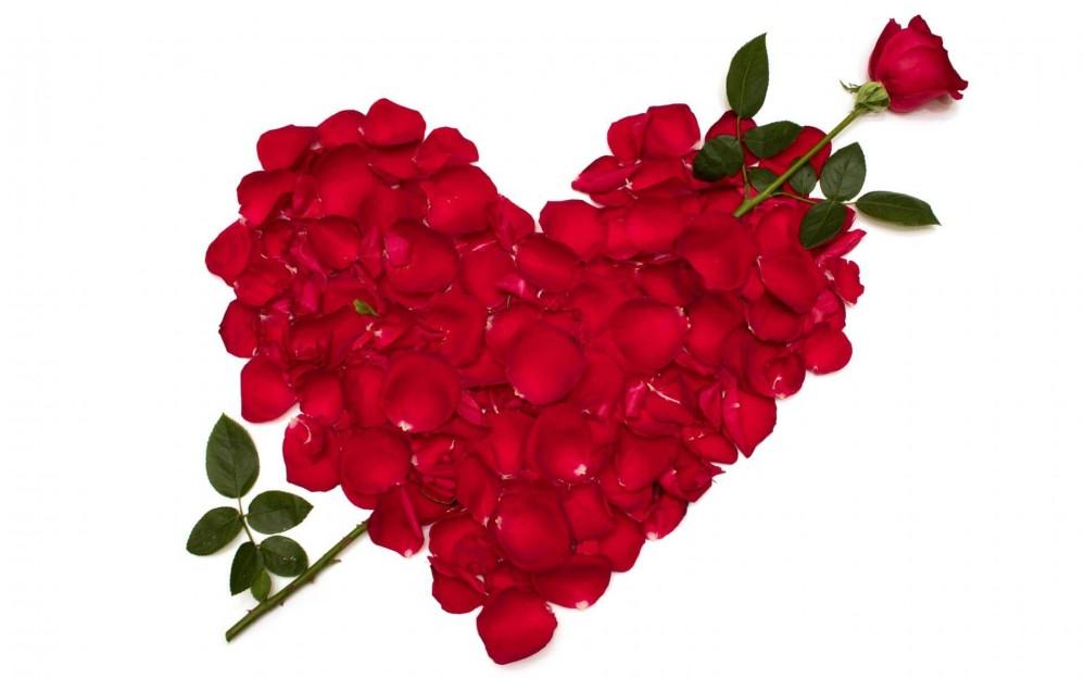 Lili Rose vous offre une rose pour la saint Valentin !
